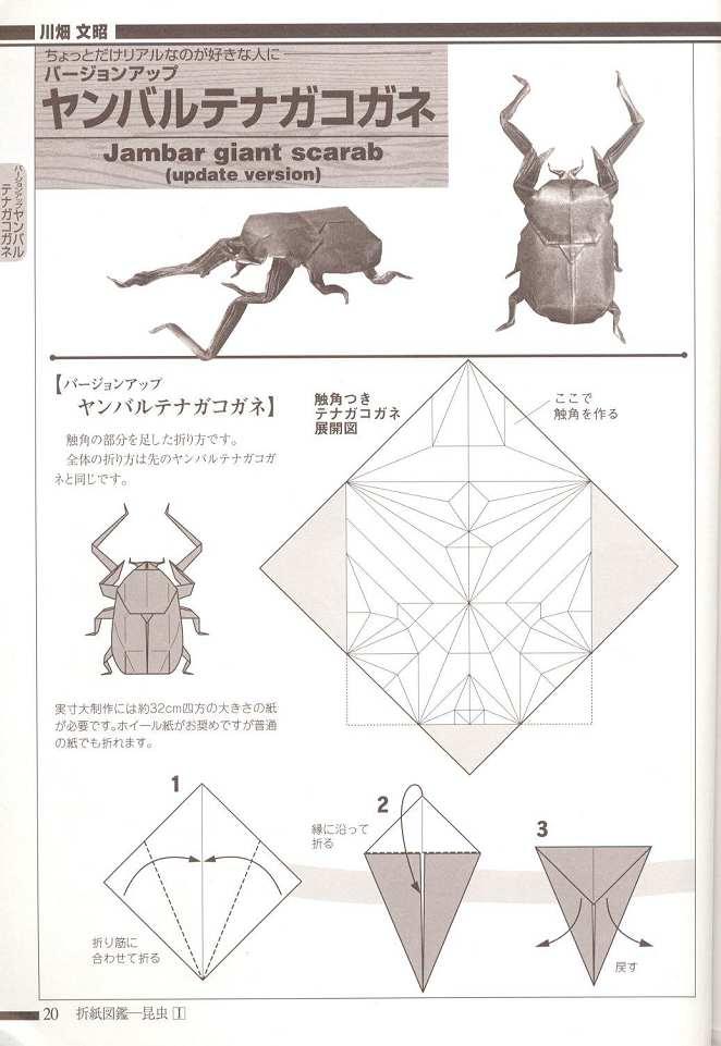 Insect Fumiaki Kawahata